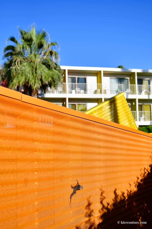 saguaro palm springs review